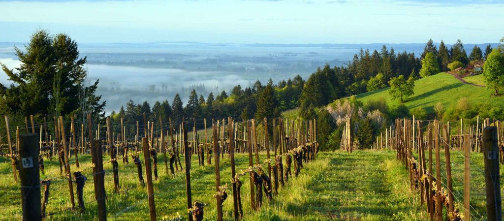 THE EYRIE VINEYARDS Willamette Valley Oregon